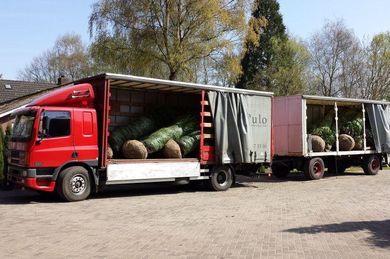 In overleg bestaat de mogelijkheid om de planten met eigen transport te bezorgen. Zo kunnen wij garant staan voor een tijdige levering onder de juiste omstandigheden.